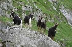 Nationalpark Nockberge in Österreich